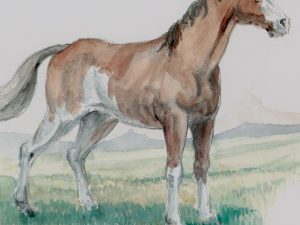 Horse without trappings
